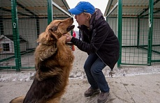 Over 200 Sochi strays move into new kennels in PovoDog shelter